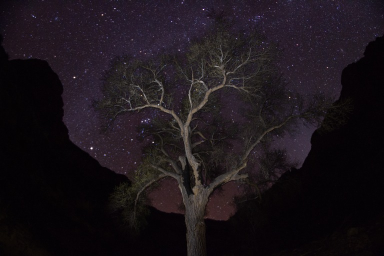 Garden Gardian tree , Grand Canyon AZ