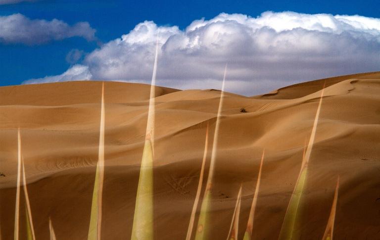 Desert Post Card