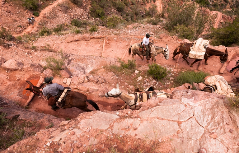Grand Canyon National Park, NPS Pack mule string, Ascending Jacob's Ladder, Bright Angel Trail.